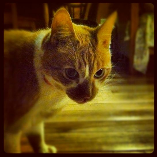 cute cats will & harry 1