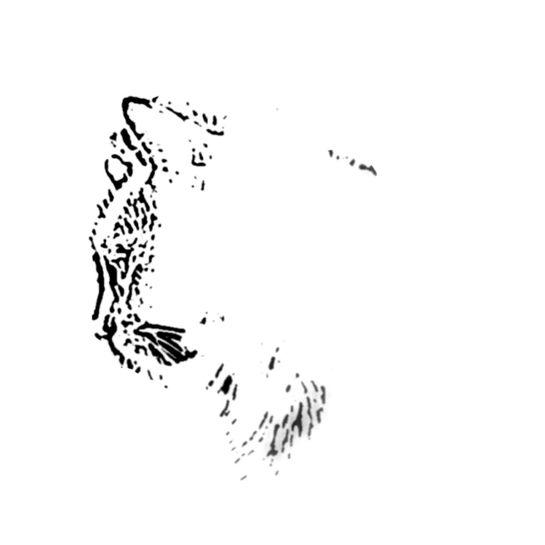 Cat Illustration for Edgar Allen Poe quote5